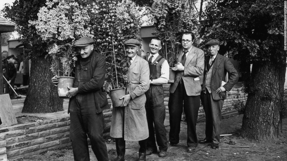 Smaller scale gardeners preparing for the 1955 show