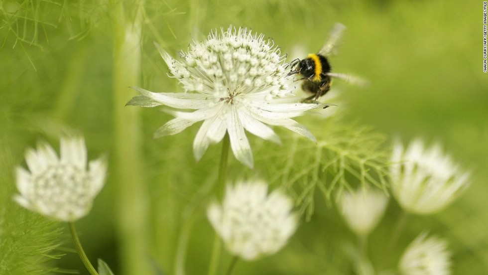 A bumblebee on a flower in the 2008 show. Sue Biggs says the detail of an individual flower can be as compelling as the grand vistas of the show.