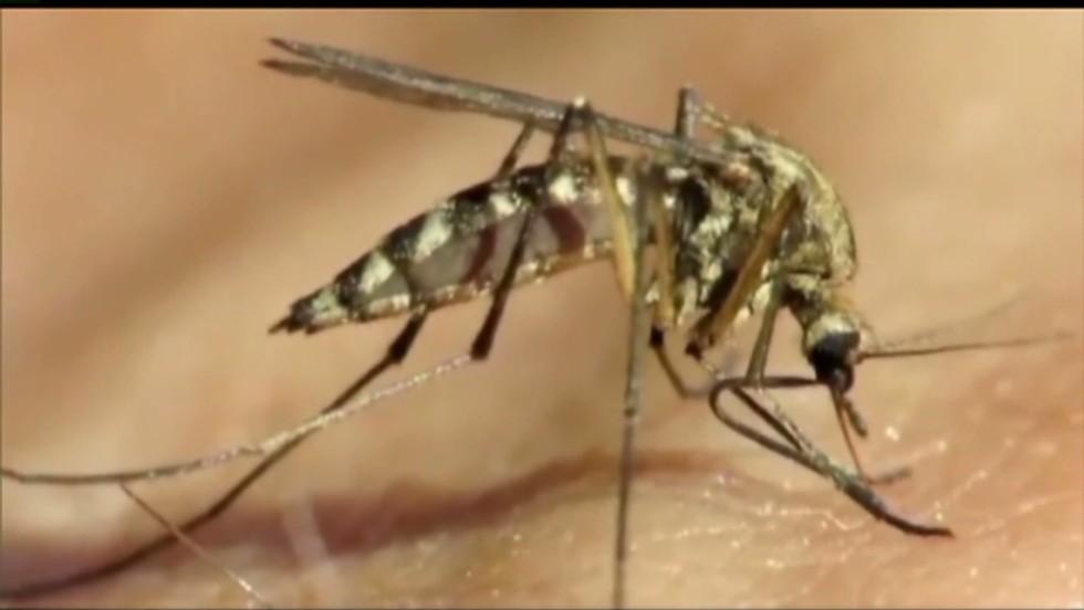 Mosquito season: Fight the bite