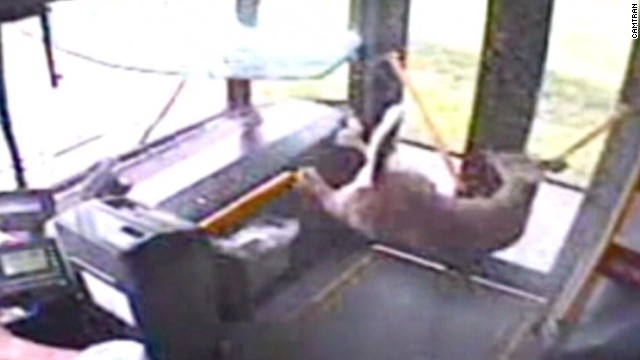 Watch a deer crash onto a moving bus