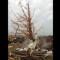 03 oklahoma city tornado 0520