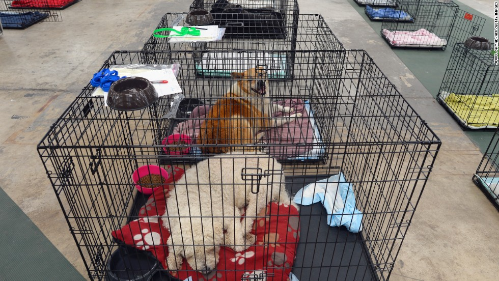 Dogs sit in cages at a shelter for displaced pets on May 23.