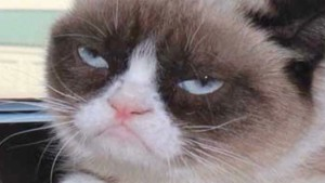 Grumpy Cat goes from meme to movie star