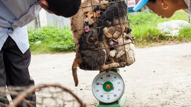 Dogs slaughtered for meat in Vietnam