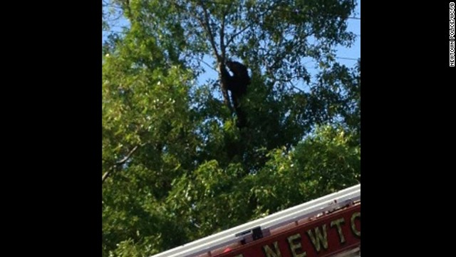 A black bear in a tree closed down the Massachusetts Turnpike.