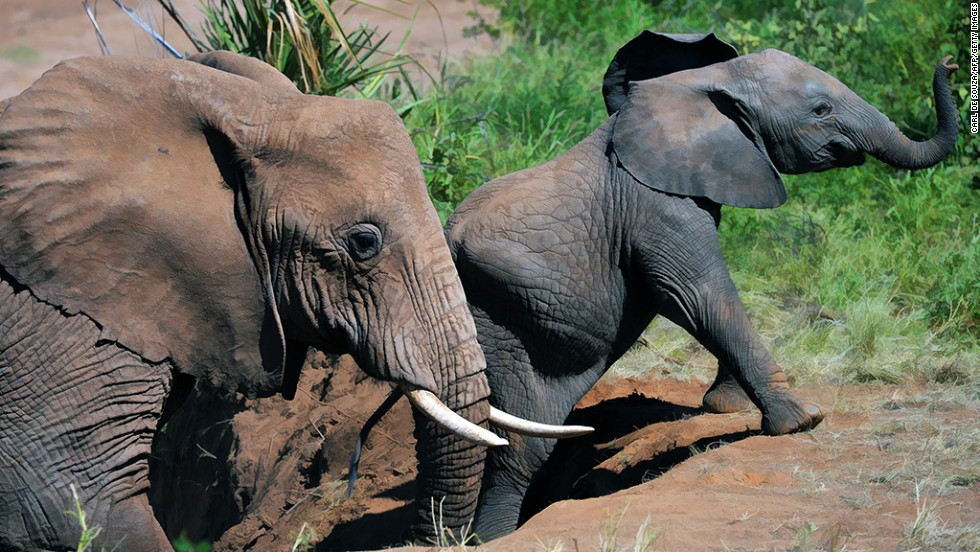 """<strong>Illegal animal trade:</strong> Illicit trade in animal parts lines pockets and empties ecosystems. <a href=""""http://www.cnn.com/changethelist"""">Vote here.</a>"""