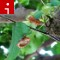 bugs ryn janie lambert cicada ireporter