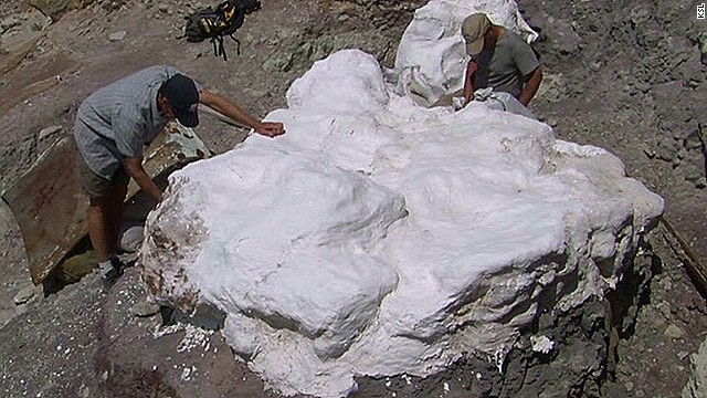 How do you move a herd of dino fossils?
