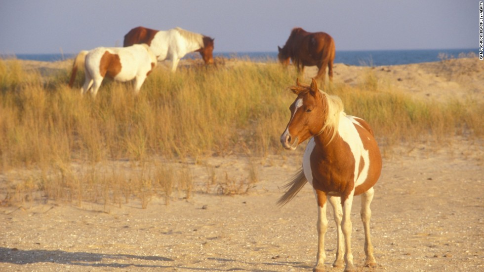 Horses run wild on Chincoteague, second among best U.S. islands.