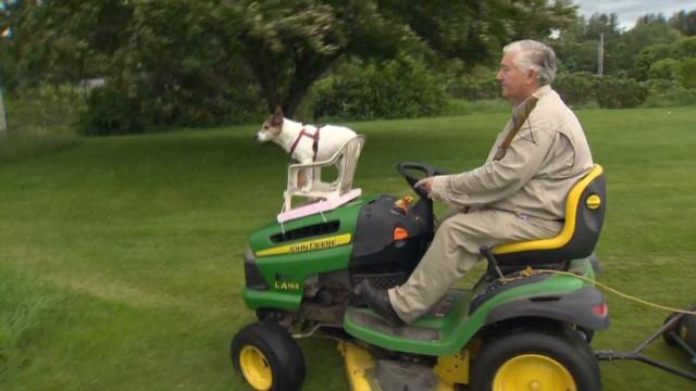 pkg dog mows lawn_00011503.jpg