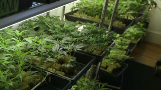 'Inside Man' looks at medical marijuana