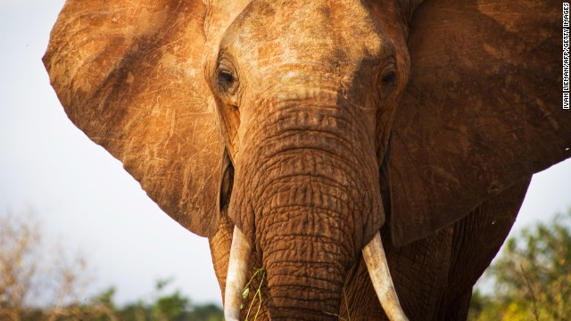 Protecting Chad's elephants from poachers