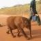 Elephant ivory 08