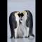 01 animal love