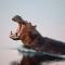 namibia wildlife gallery hippo