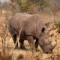 namibia wildlife gallery rhino