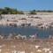 namibia wildlife gallery etosha waterhole
