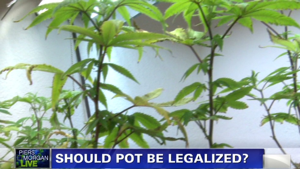 marijuana should not be legalized Should marijuana be legalized united states is facing many controversial issues today the highly controversial issue that comes up in newspapers again and again and for this reason is why people are taking action to oppose the legalization of marijuana marijuana should not be legalized.