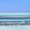 zanzibar-farming seaweed