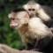 Bieber monkey 1