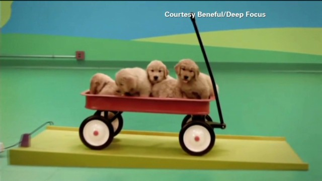 tsr pkg moos dog goldberg machine commercial_00014021.jpg