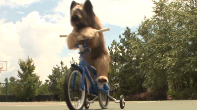 pkg dog goes for scooter riding world record_00003127.jpg