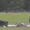14.alaska.crash