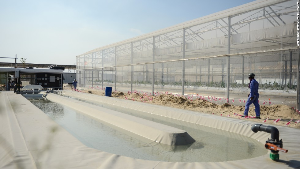 With the algae pond, researchers are finding ways to cultivate the organisms without the usual high costs and geographic constraints.