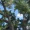 Teddy Roosevelt Park 06
