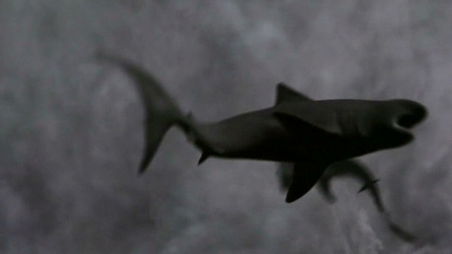 'Sharknado' hijacks Twitter