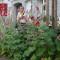 richard reynolds guerrilla gardening 5