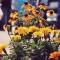 richard reynolds guerrilla gardening 8