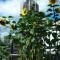 richard reynolds guerrilla gardening 6