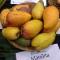 manilita mangoes