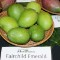 Fairchild mangoes