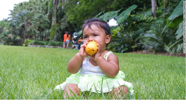 Never too young to enjoy a mango.