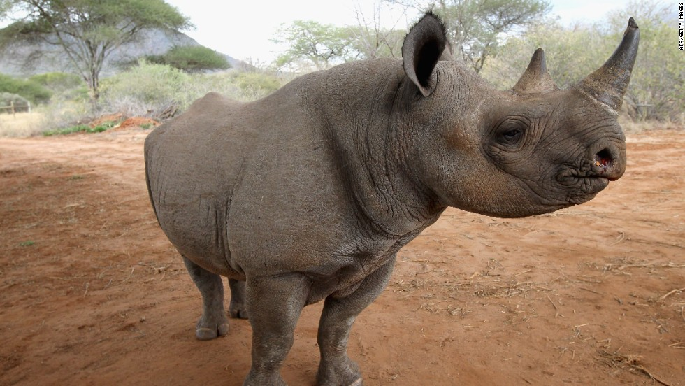 To deal with the crisis, South Africa requested permission to launch a once-off legal sale of its stockpiled rhino horn in the hope of quelling poaching.