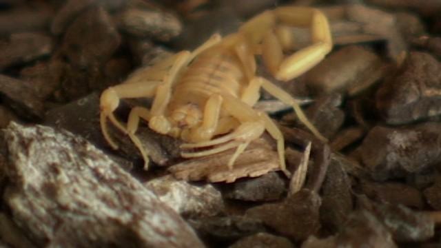 pkg backyard scorpion invasion_00001912.jpg