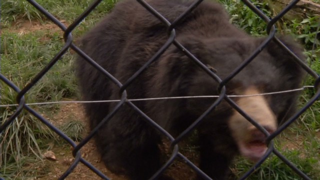 pkg sloth bears_00012714.jpg