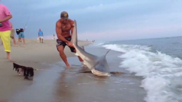 Man wrestles shark, finds fame