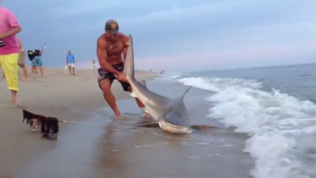 vo shark wrestling_00000729.jpg