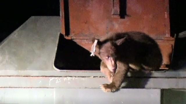 bear dumpster rescue rmg_00004707.jpg