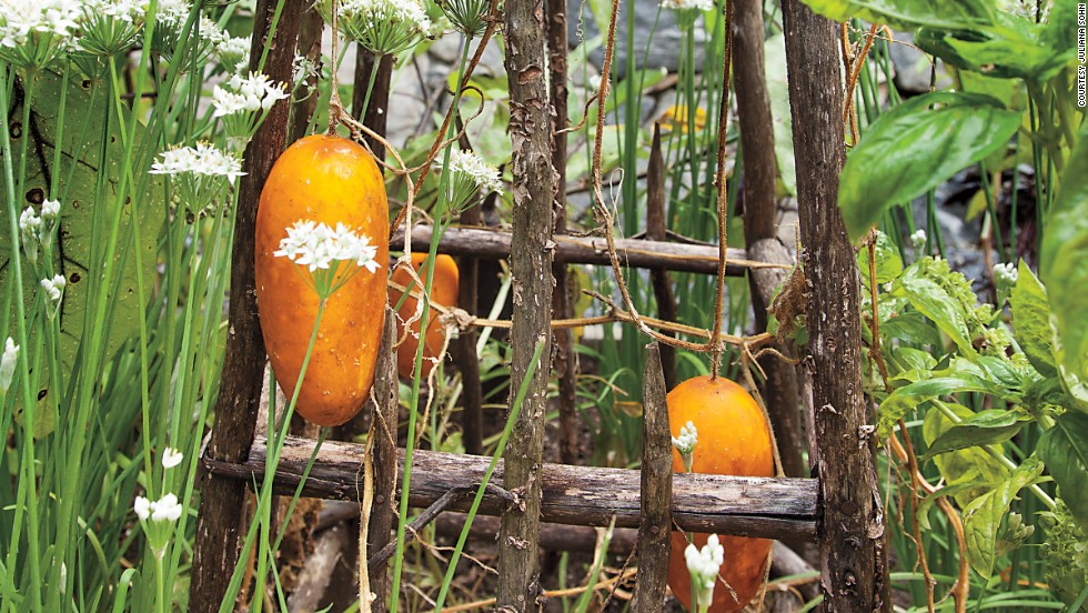 "To save space, Steiner grows pickling cucumber vertically, on a wooden tuteur (""The orange color means they've overripened, but they still taste every bit as good,"" she says)."