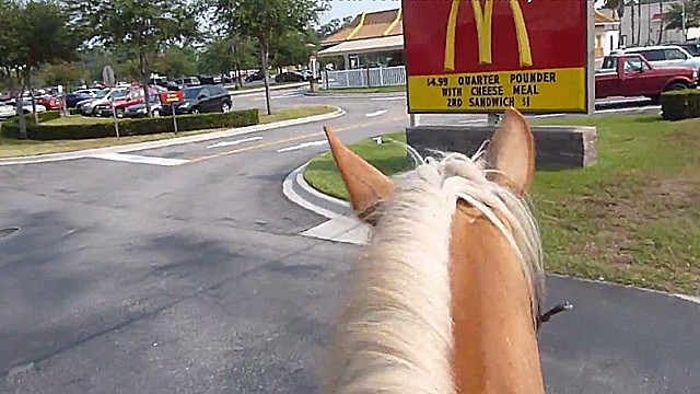 Not every horse can enjoy the drive-thru