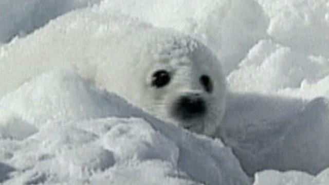 Arctic melt keeps scientist mom up nights