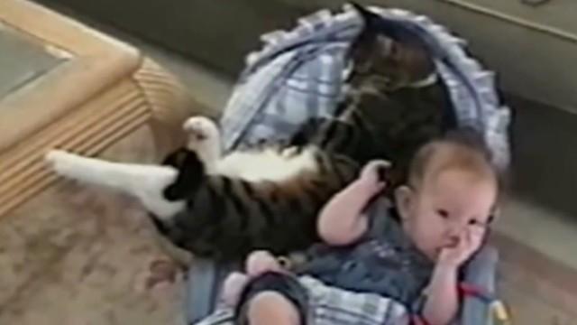 orig distraction cat baby cuddlefest_00002714.jpg