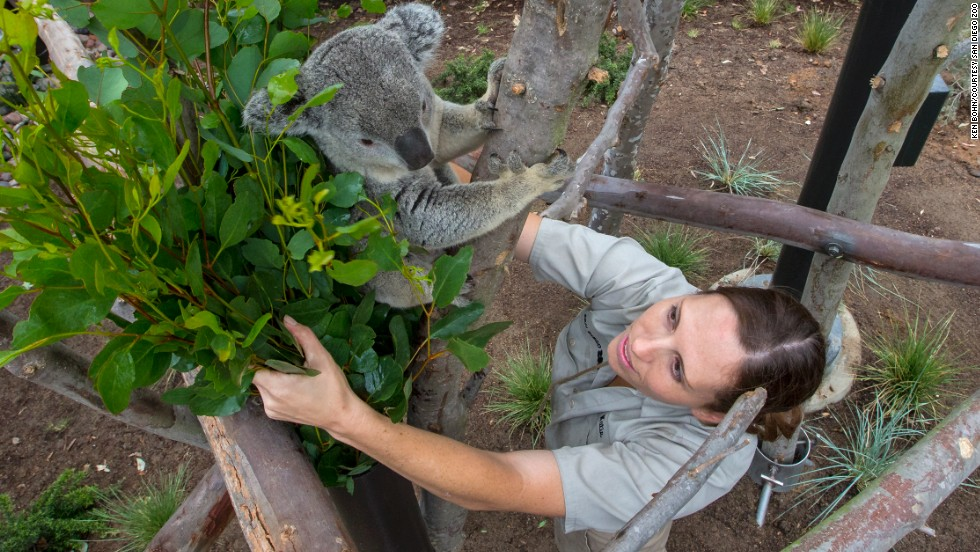 The new koala exhibit at the San Diego Zoo was almost as exciting as when the zoo's original koala exhibit opened when the author was a child.