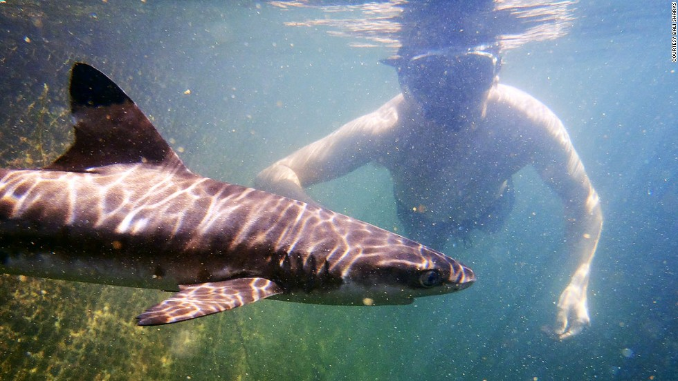 Bali Sharks runs a nursery for young sharks that have been saved from the finning trade.