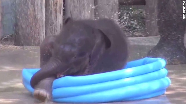 orig distraction baby elephant plays in pool_00005730.jpg