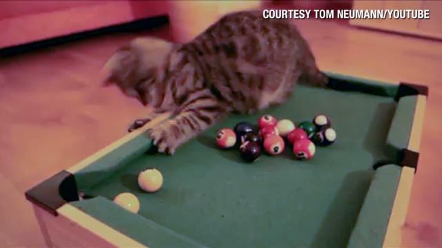 orig.distraction kitty plays billiards_00004114.jpg
